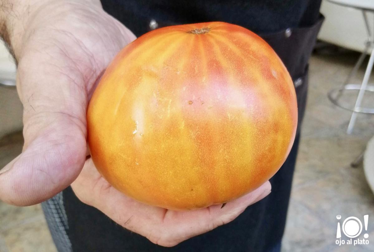 09_tomate_arrels2_D