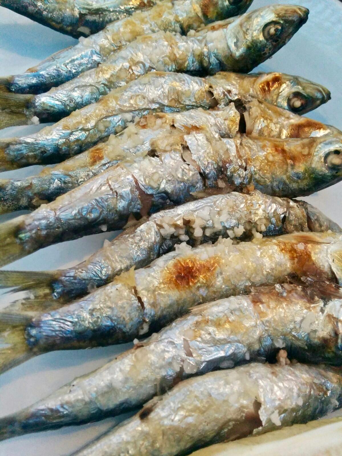 04_sardinas
